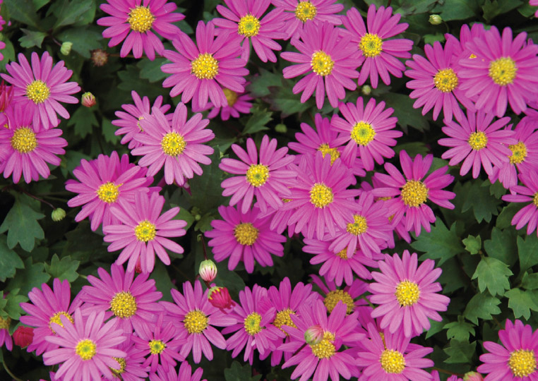 Ground Covers range by Plant Native!