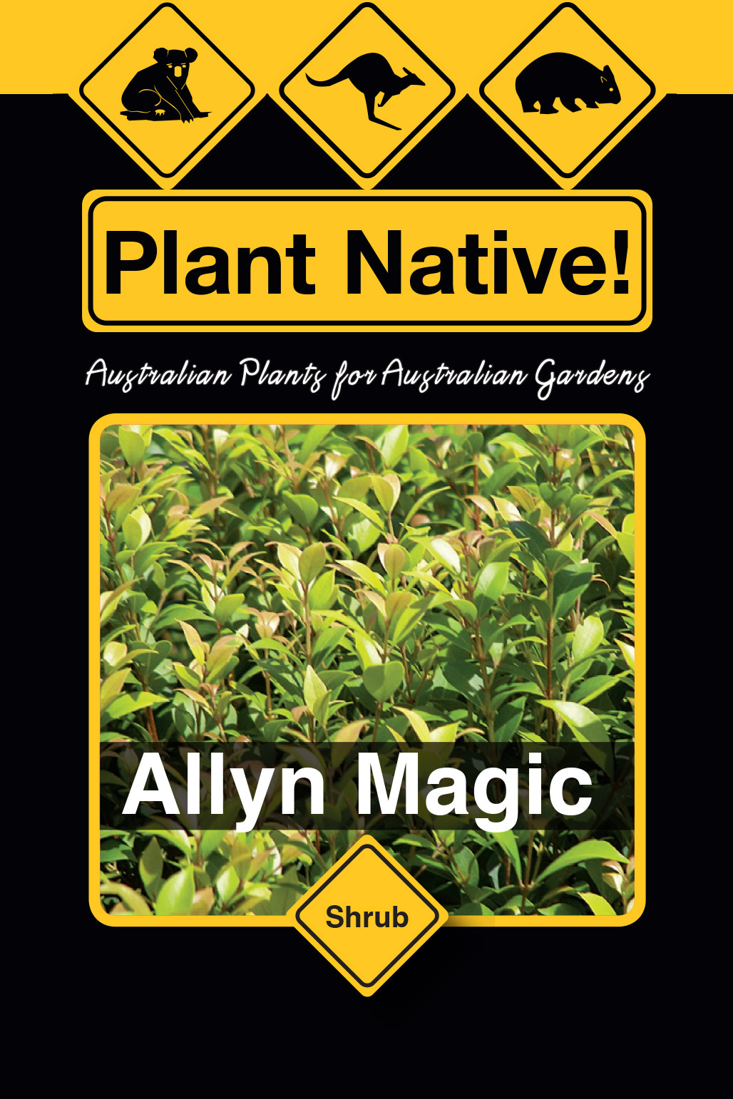 Allyn Magic - Plant Native!