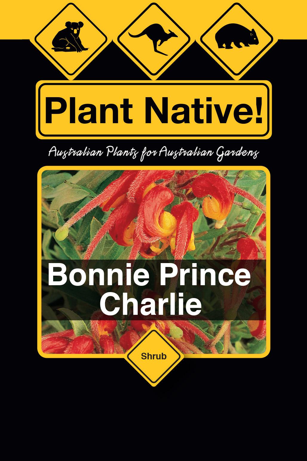 Bonnie Prince Charlie - Plant Native!
