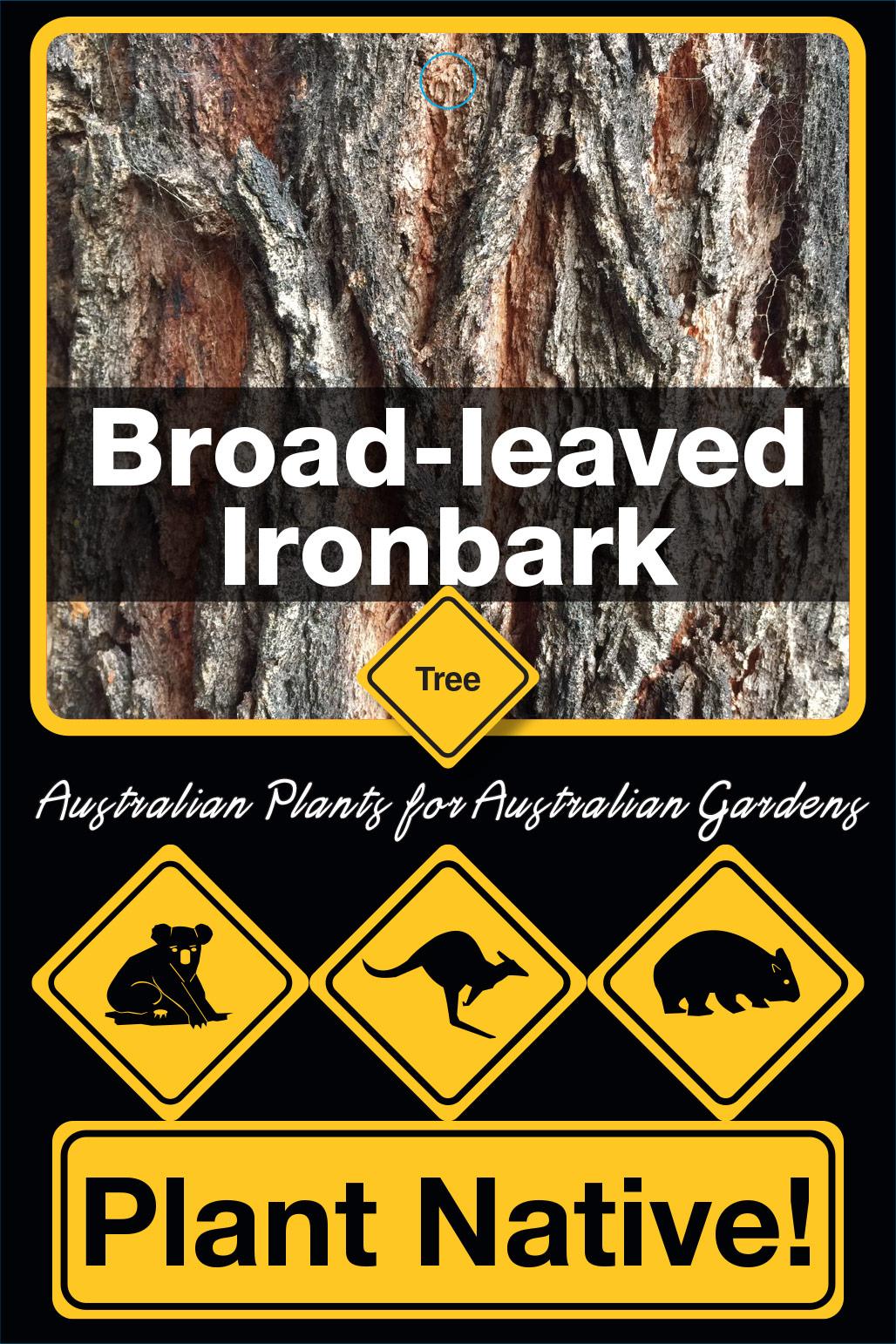 Broad-leaved Ironbark - Plant Native!