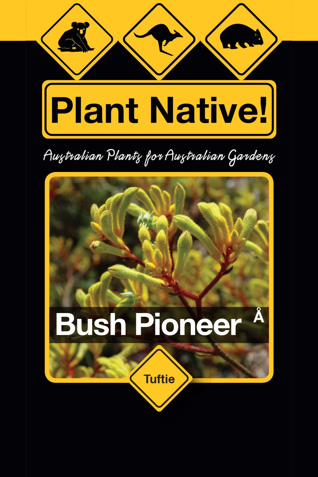 Bush Pioneer - Plant Native!