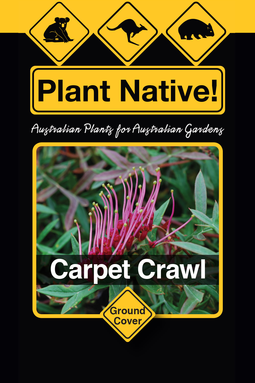 Carpet Crawl - Plant Native!