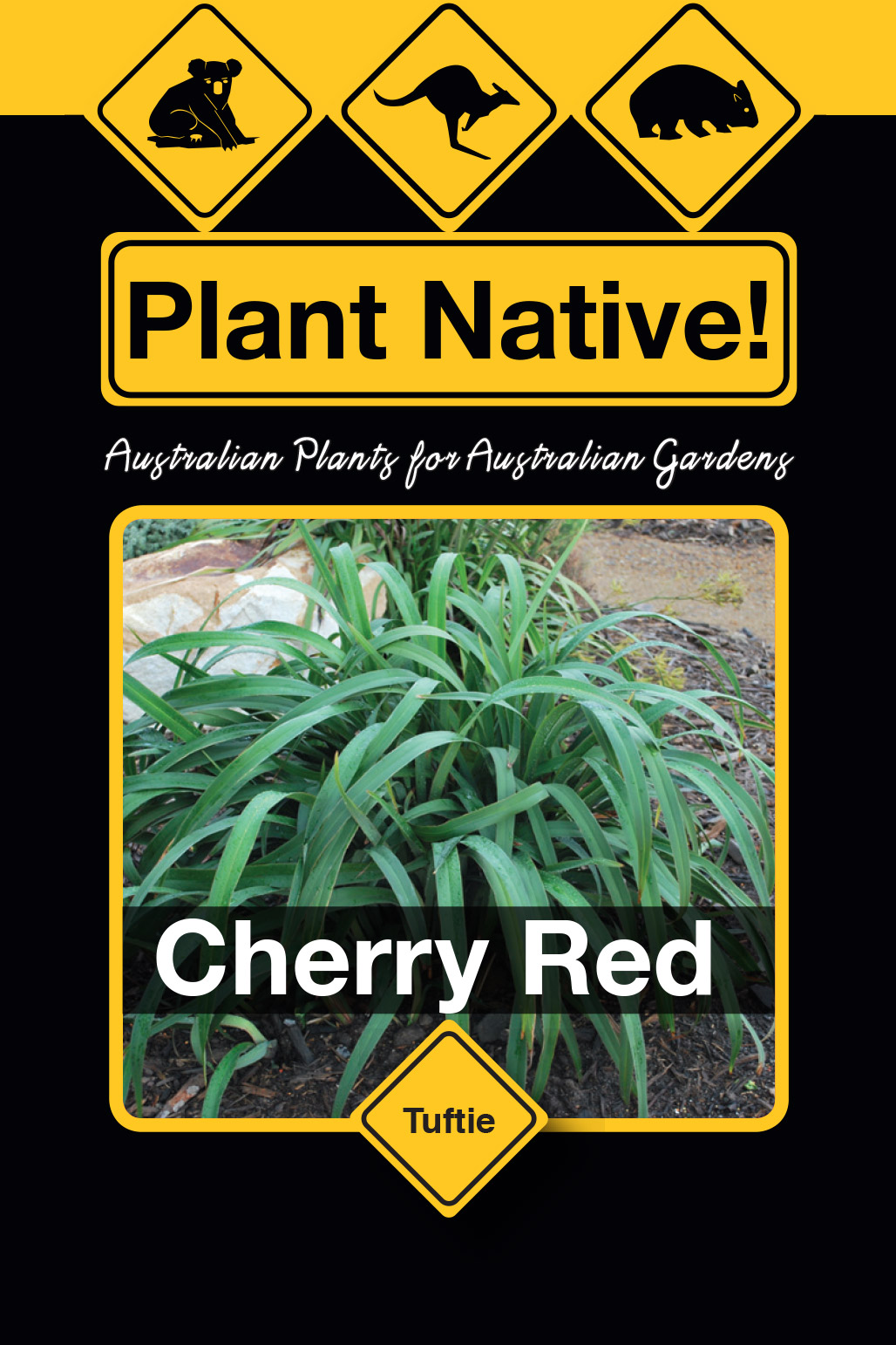 Cherry Red - Plant Native!