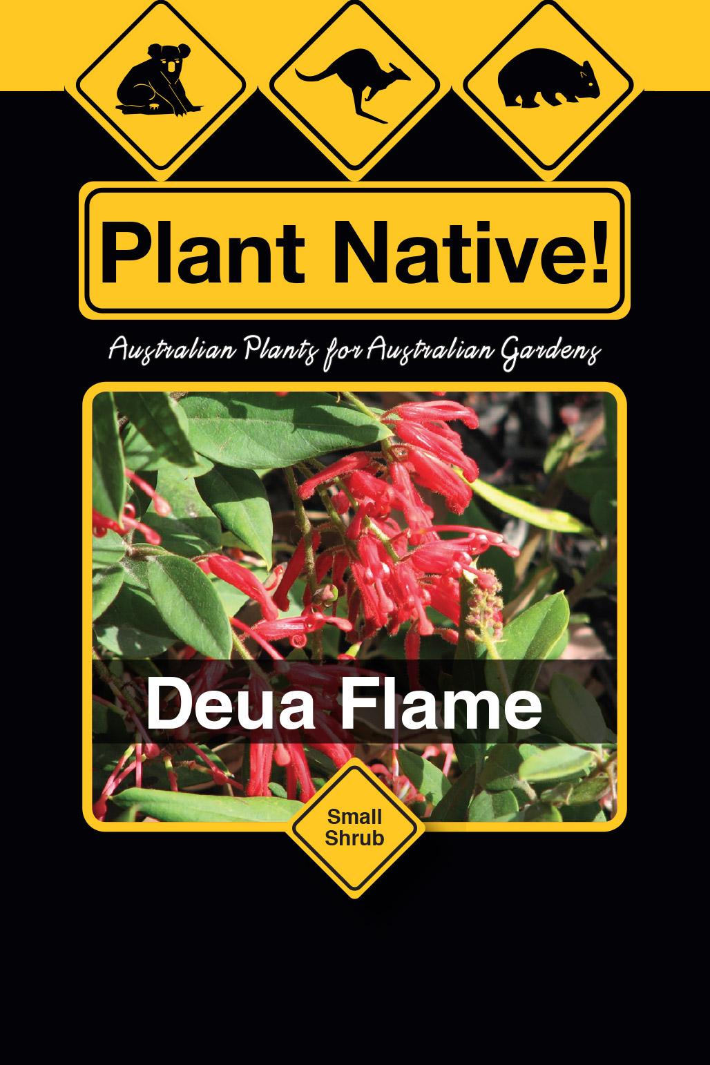 Deua Flame - Plant Native!