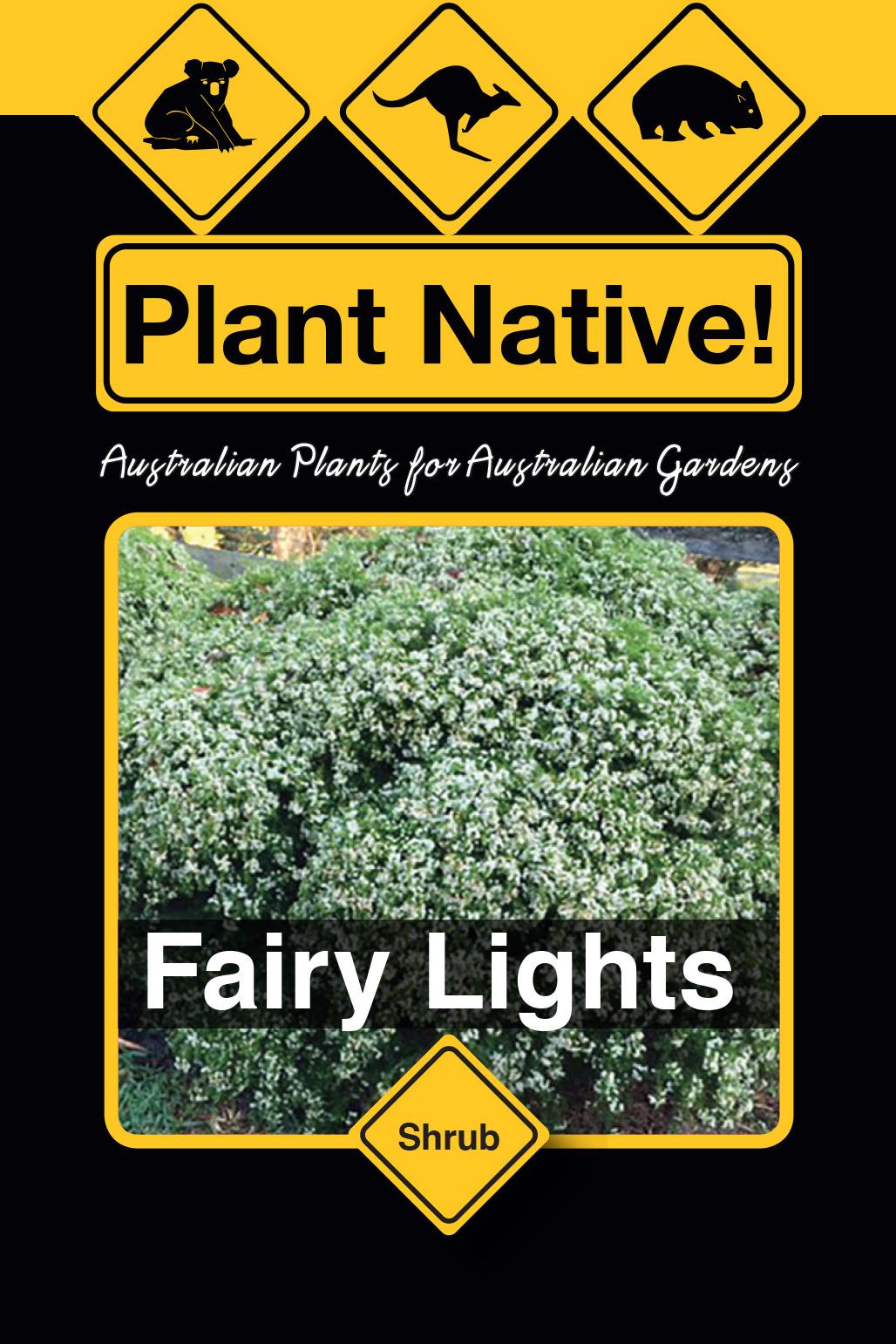 Fairy Lights - Plant Native!
