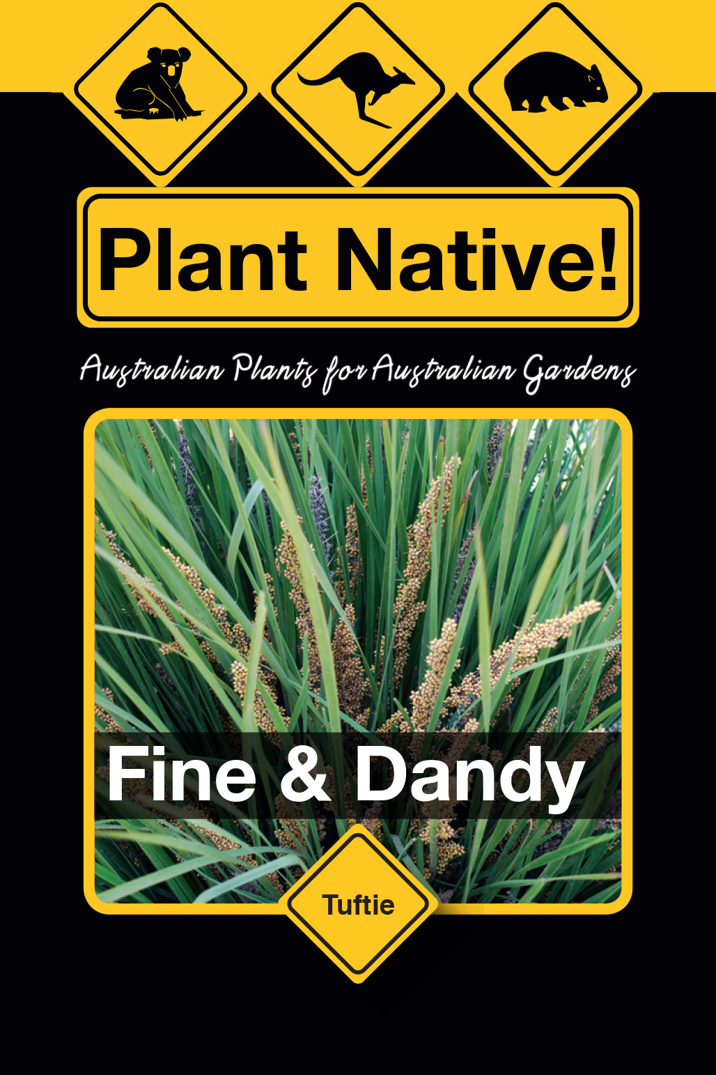 Fine & Dandy - Plant Native!