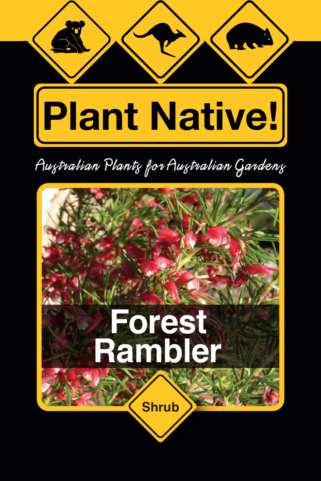 Forest  Rambler - Plant Native!