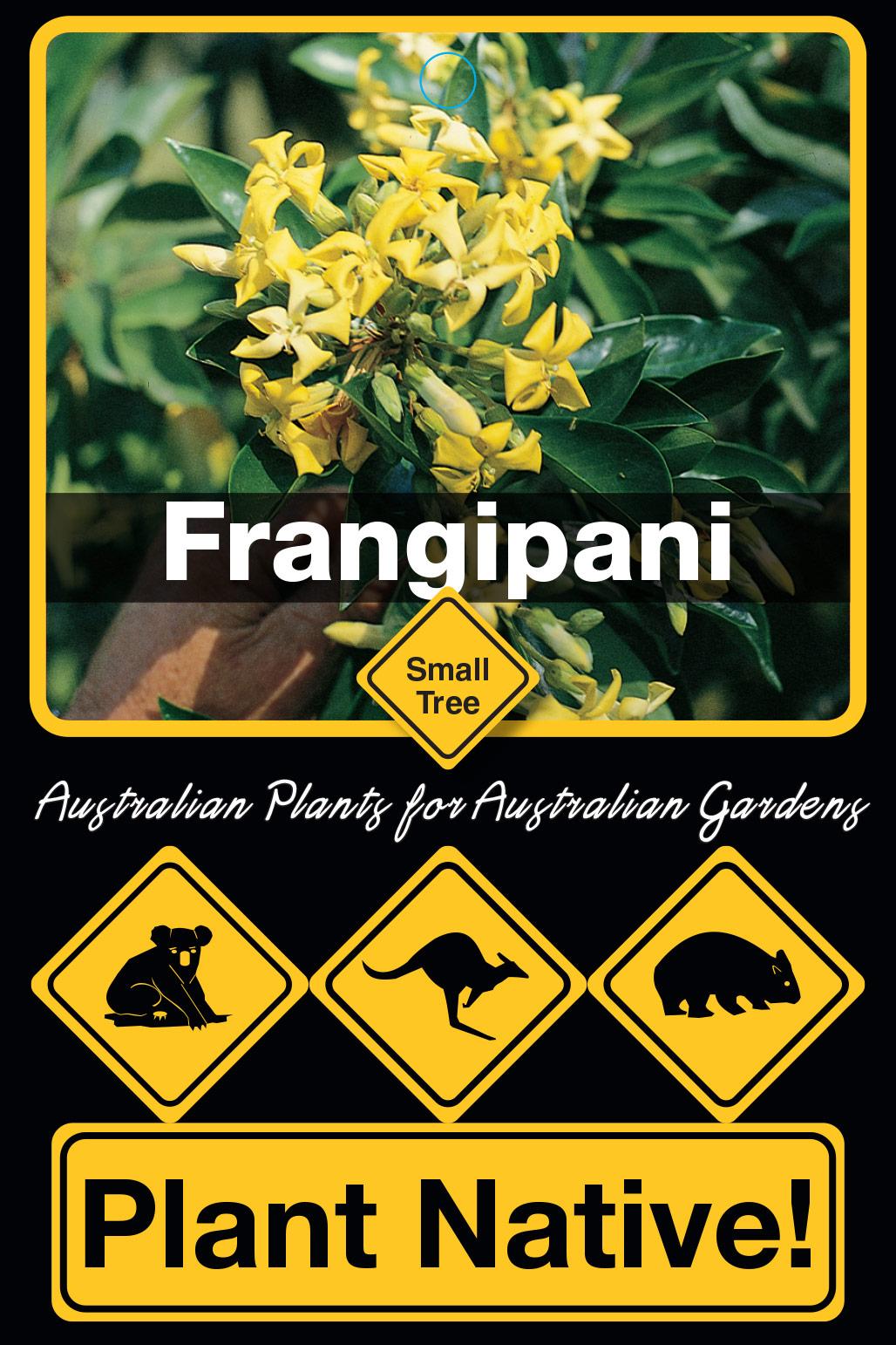 Frangipani - Plant Native!