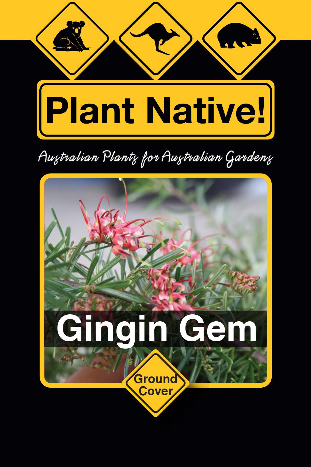 Gingin Gem - Plant Native!