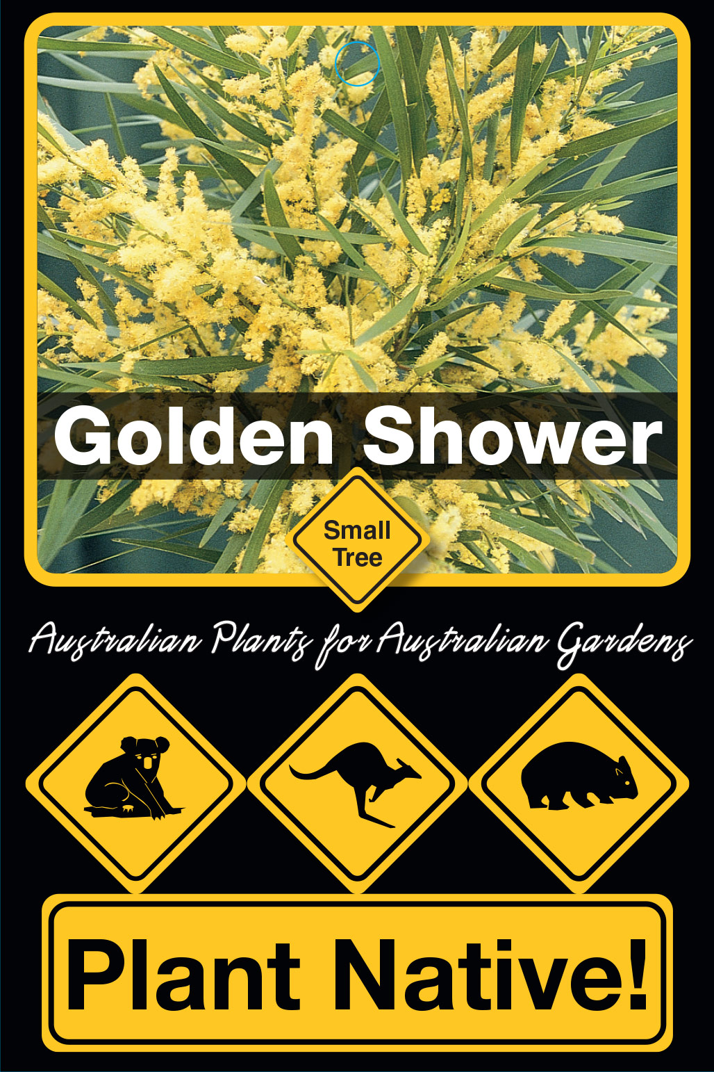 Golden Shower - Plant Native!