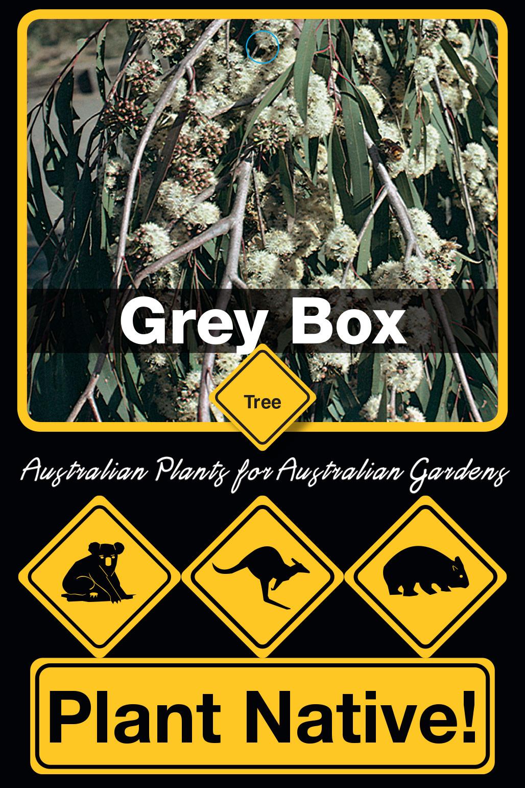 Grey Box - Plant Native!