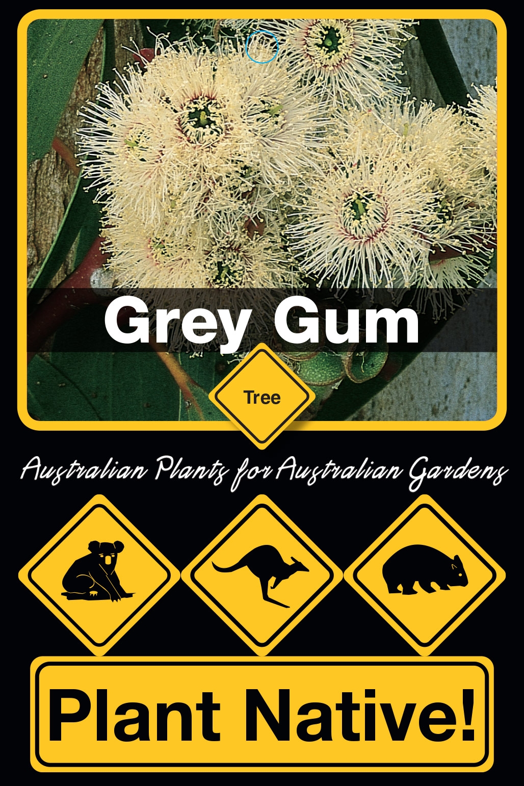 Grey Gum - Plant Native!