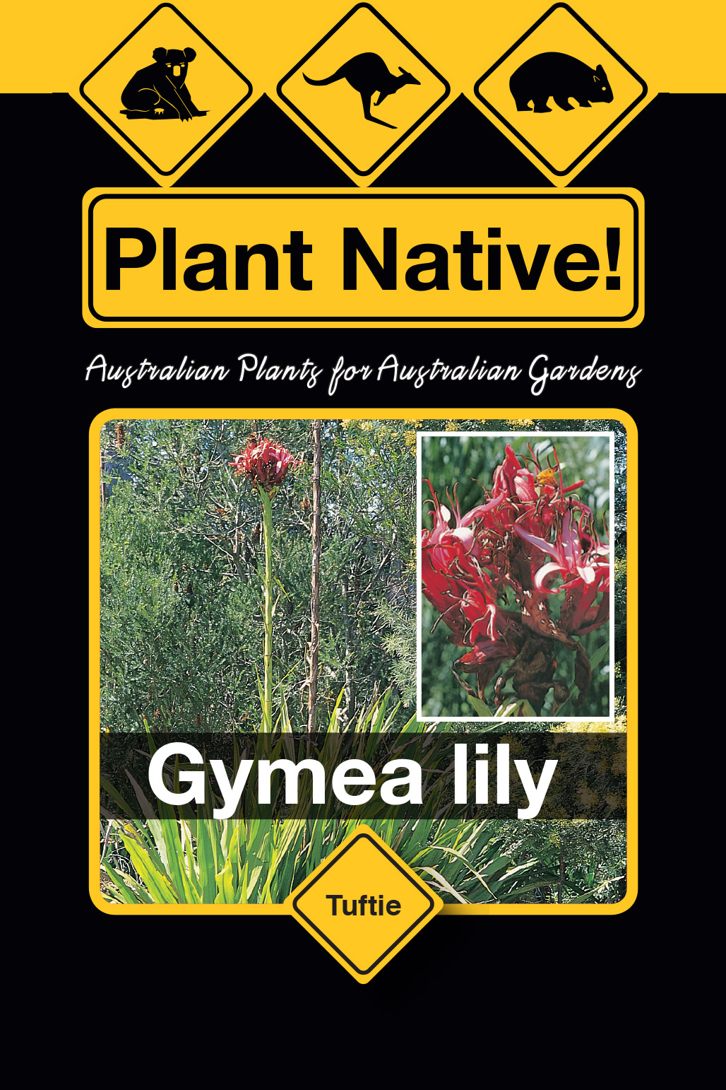 Gymea Lilly - Plant Native!