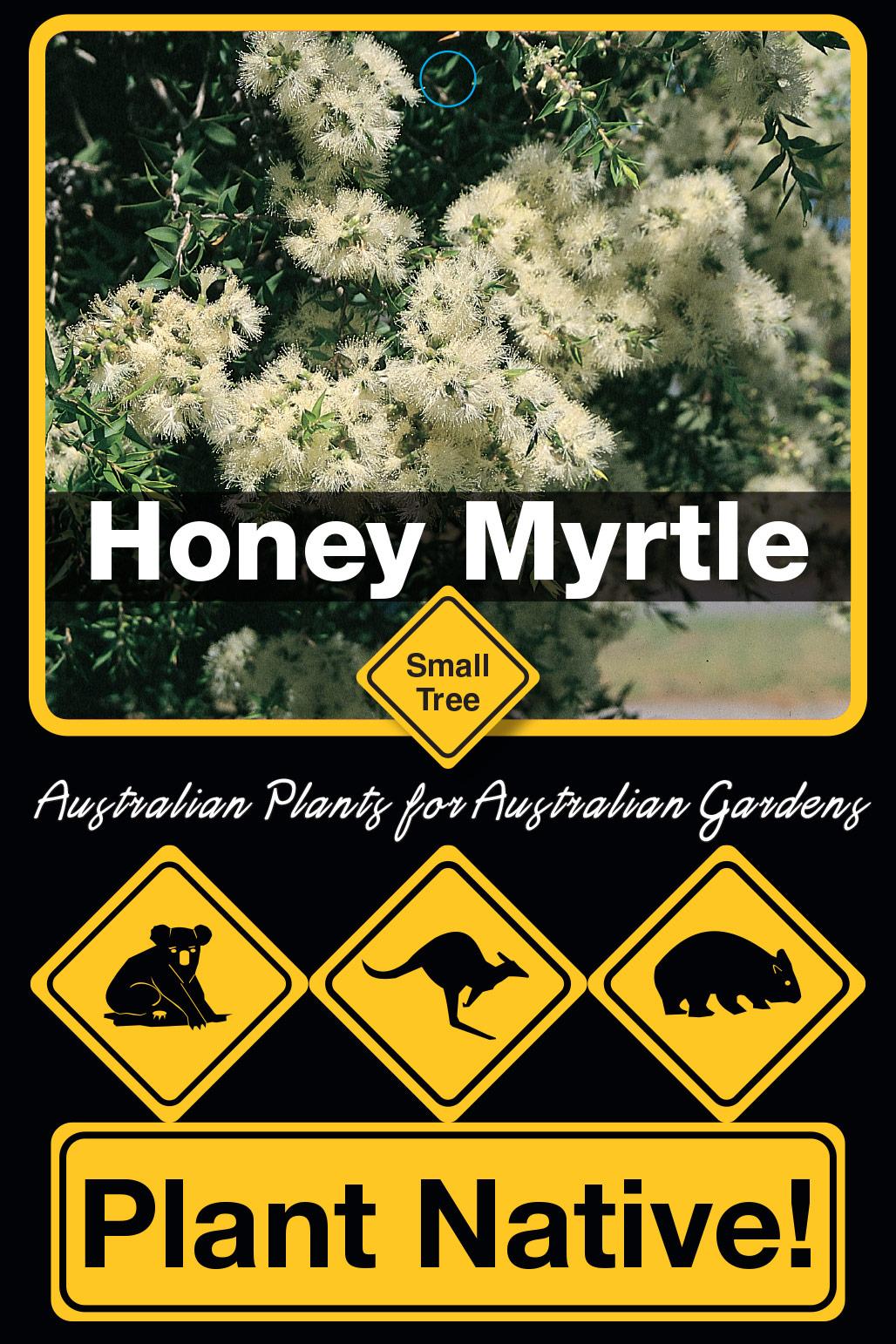 Honey Myrtle - Plant Native!