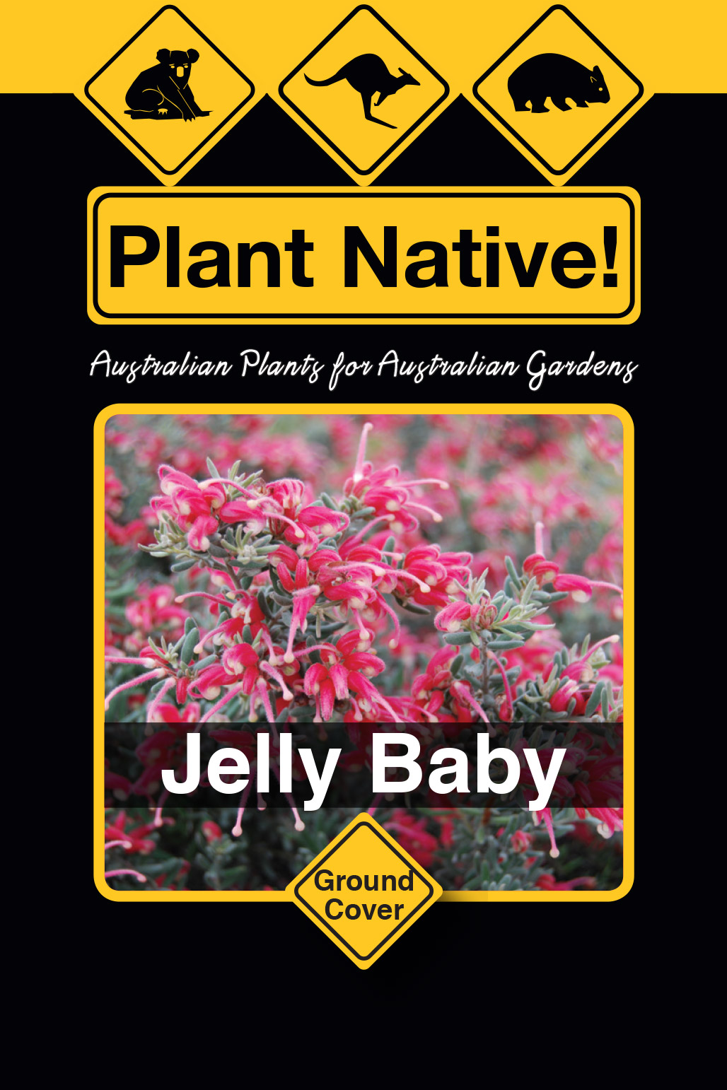 Jelly Baby - Plant Native!
