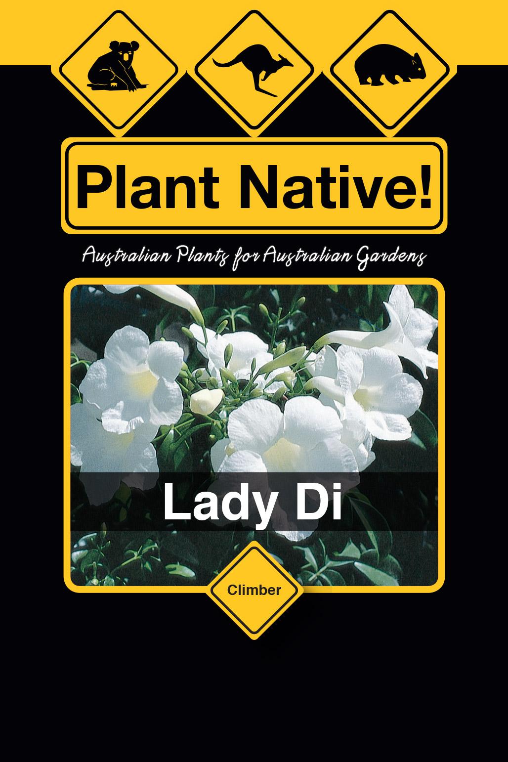 Lady Di - Plant Native!
