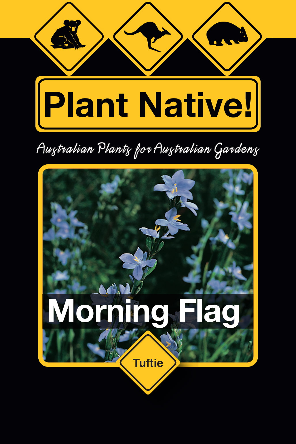 Morning Flag - Plant Native!