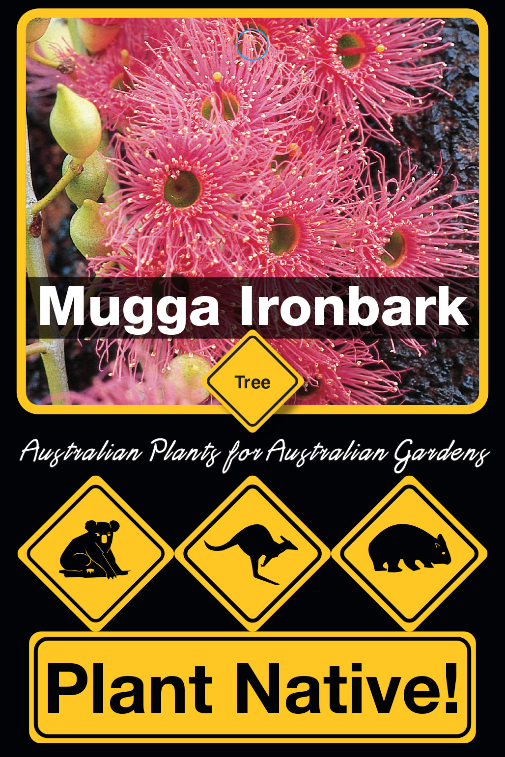 Mugga Ironbark - Plant Native!