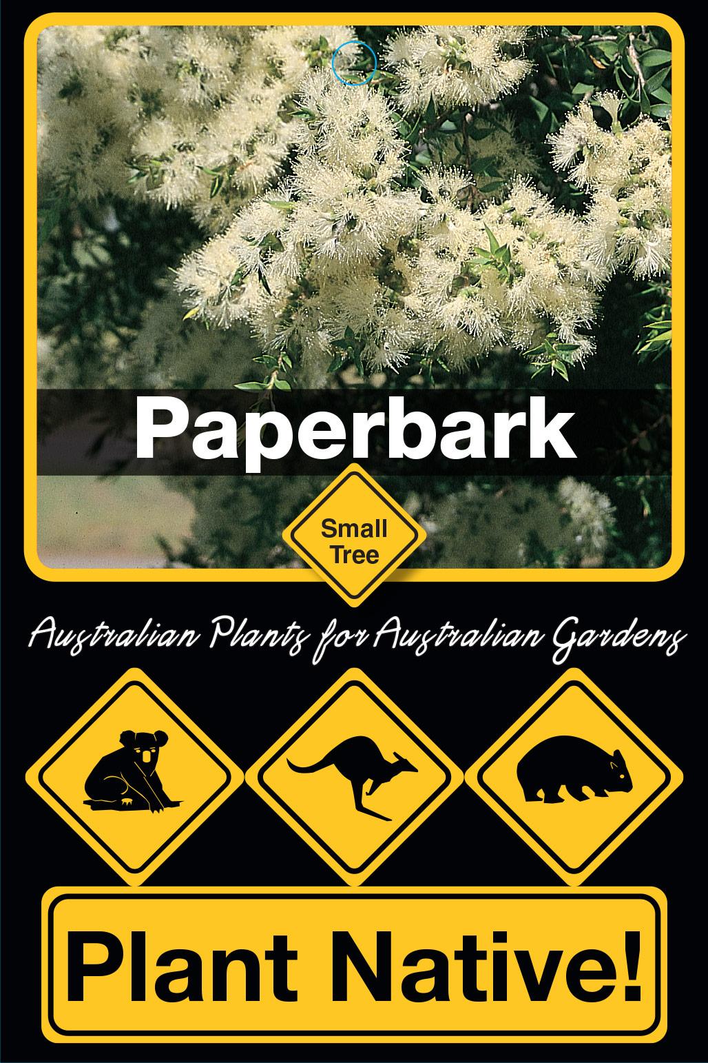 Paperbark - Plant Native!