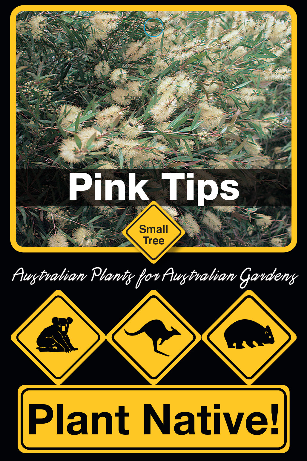 Pink Tips - Plant Native!