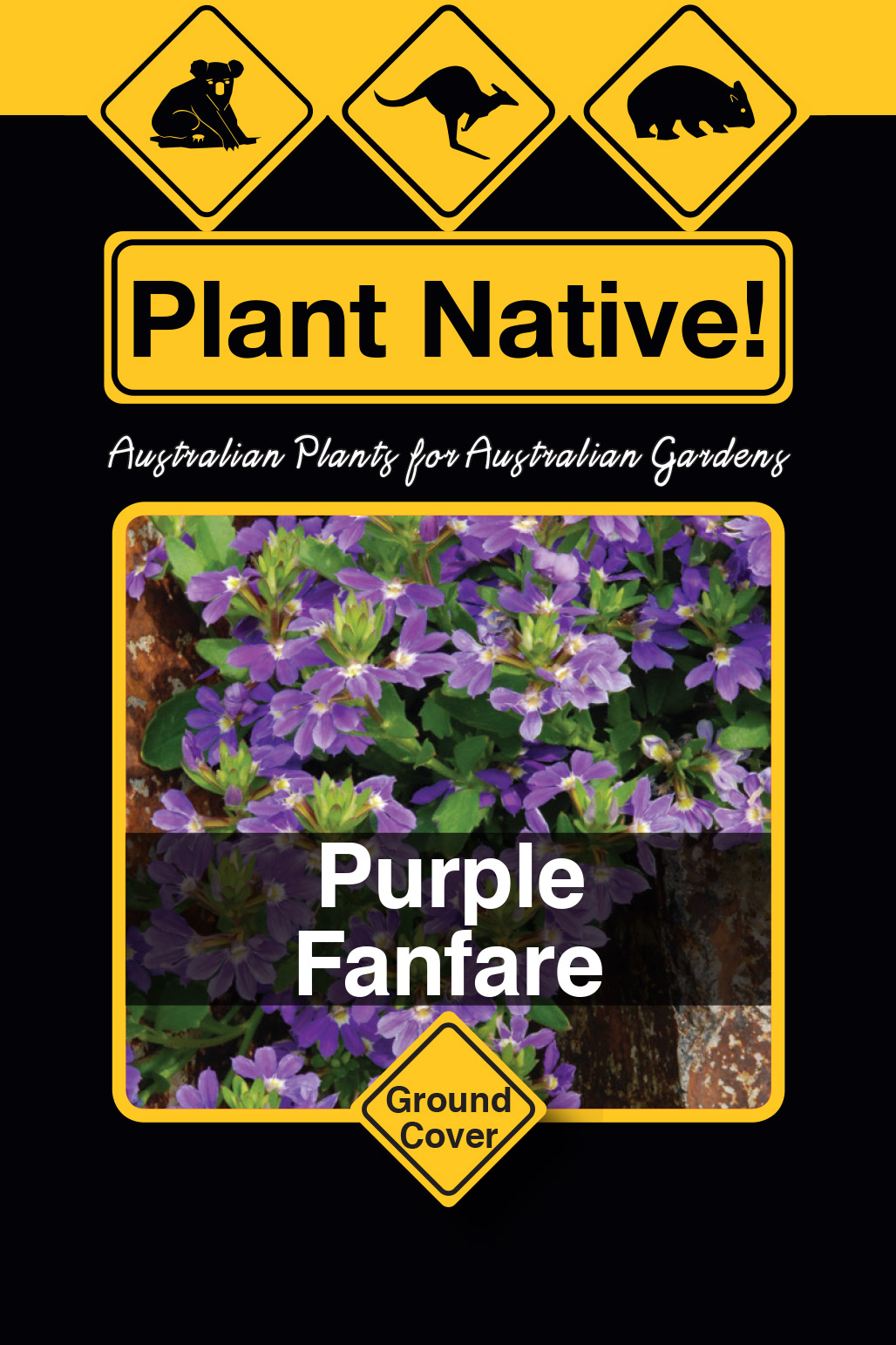 Purple Fanfare - Plant Native!