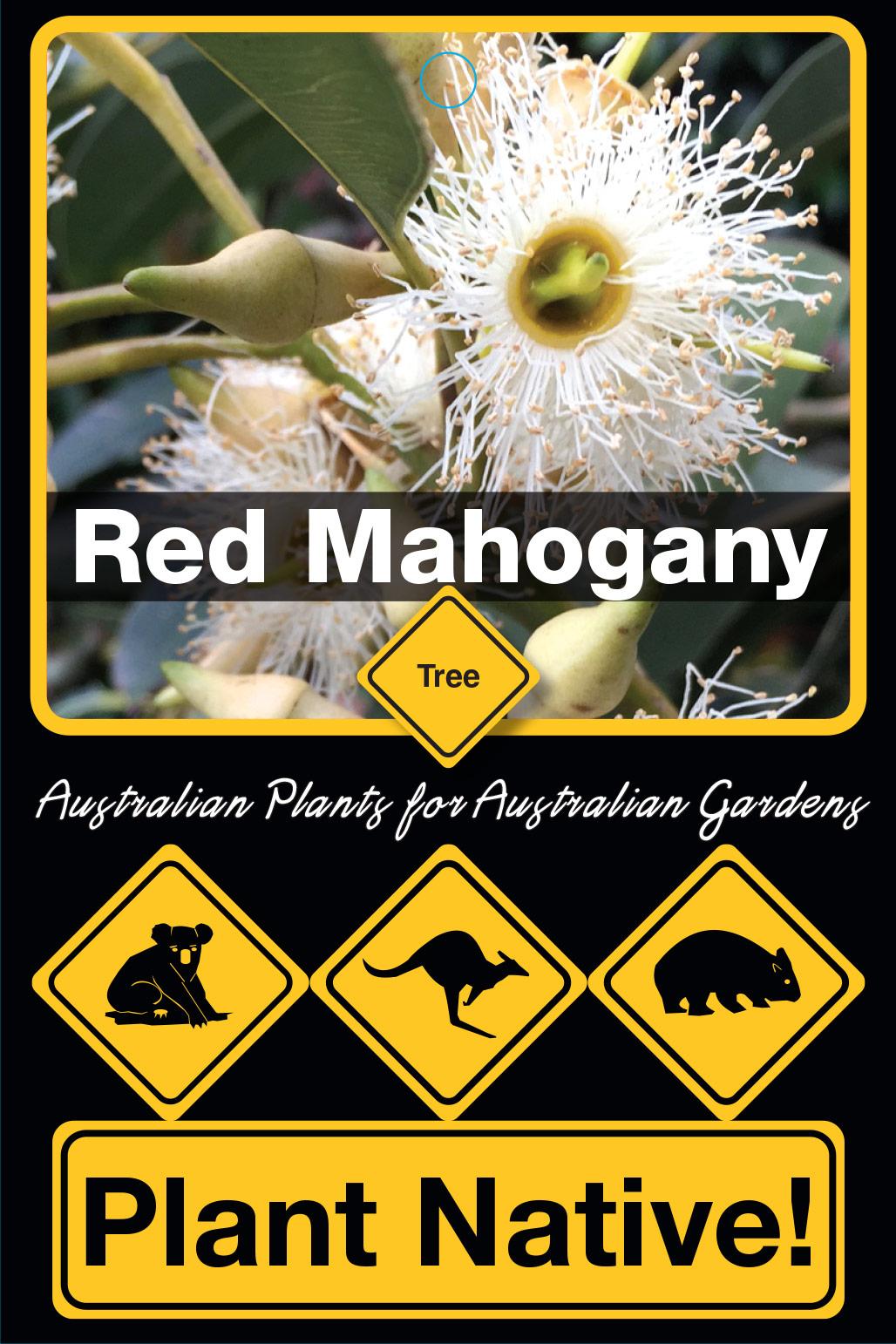 Red Mahogany - Plant Native!