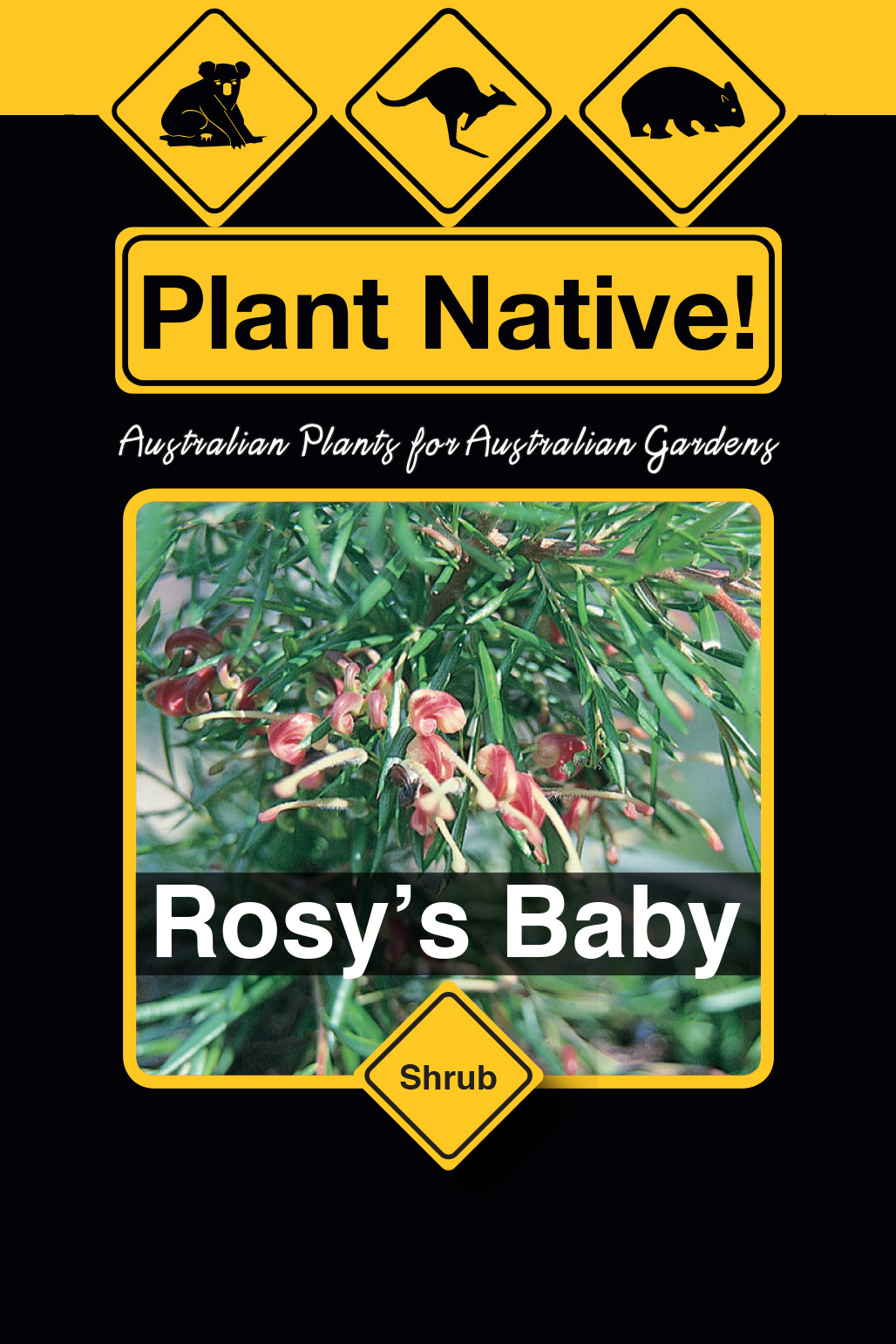 Rosy's Baby - Plant Native!