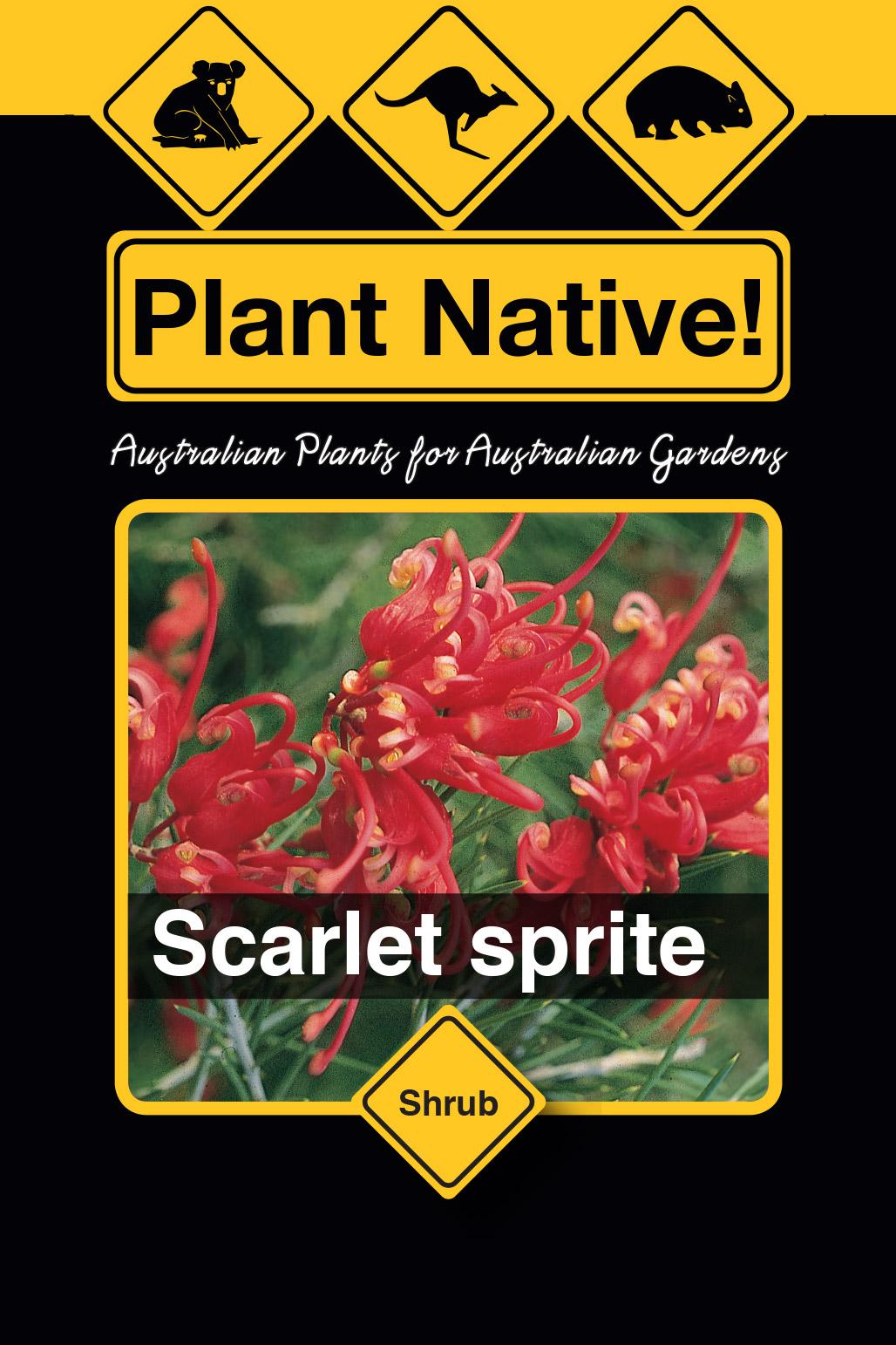Scarlet Sprite - Plant Native!