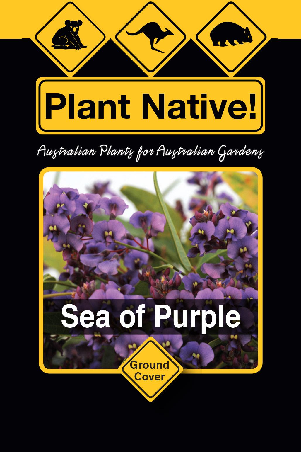 Sea of Purple - Plant Native!