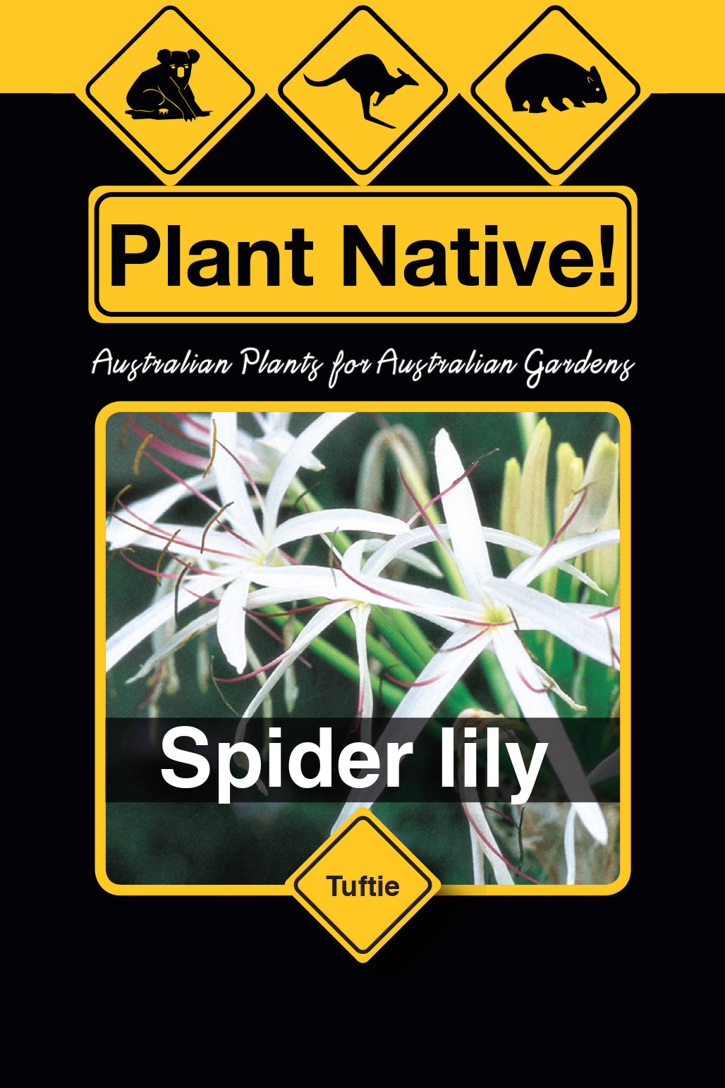 Spider lily - Plant Native!