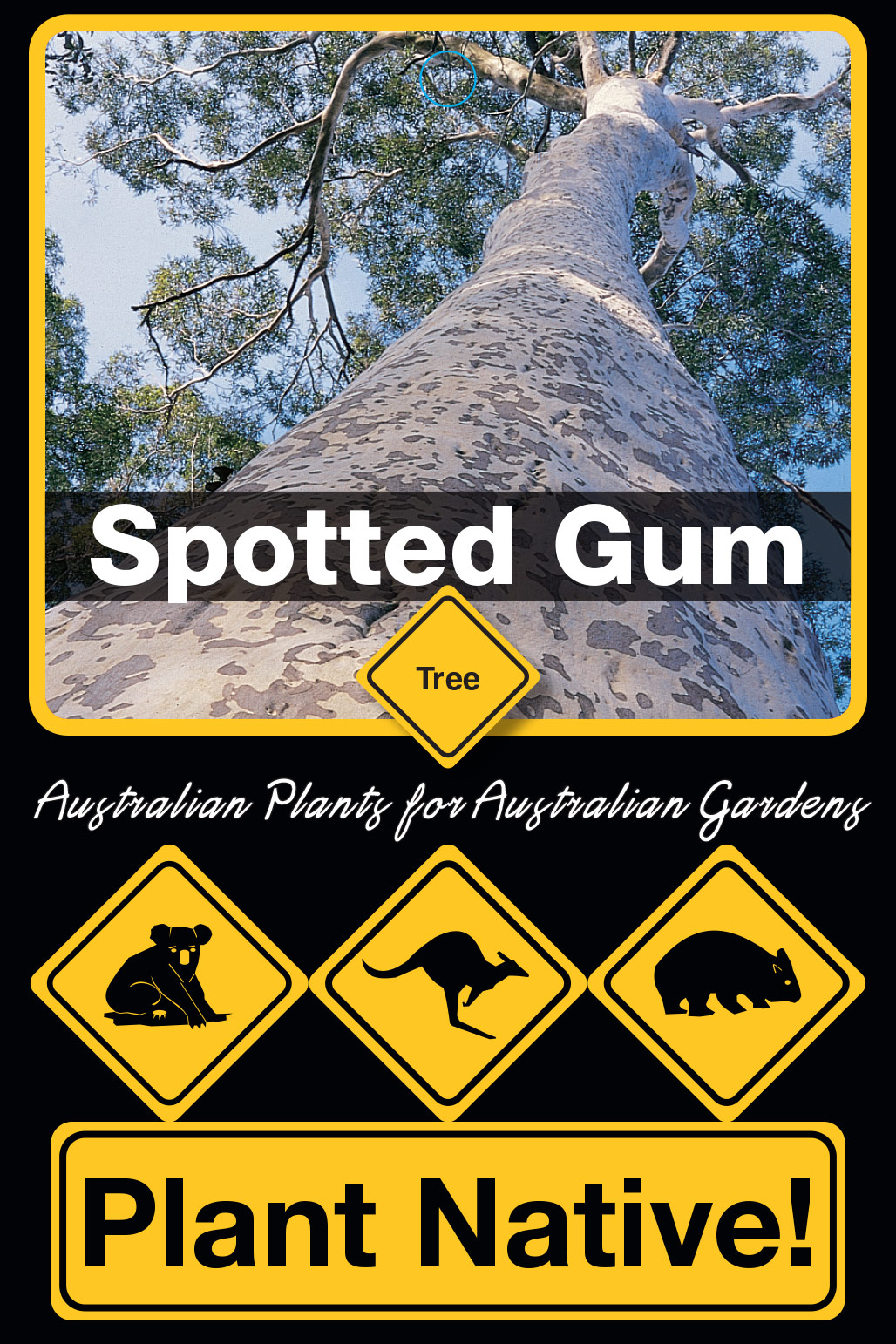 Spotted Gum - Plant Native!