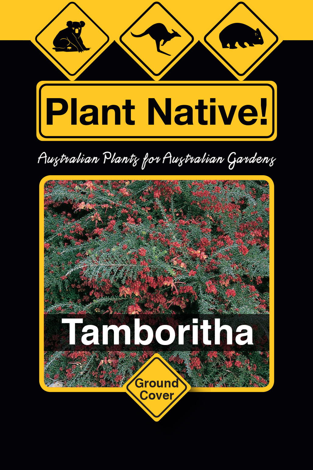 Tamboritha - Plant Native!