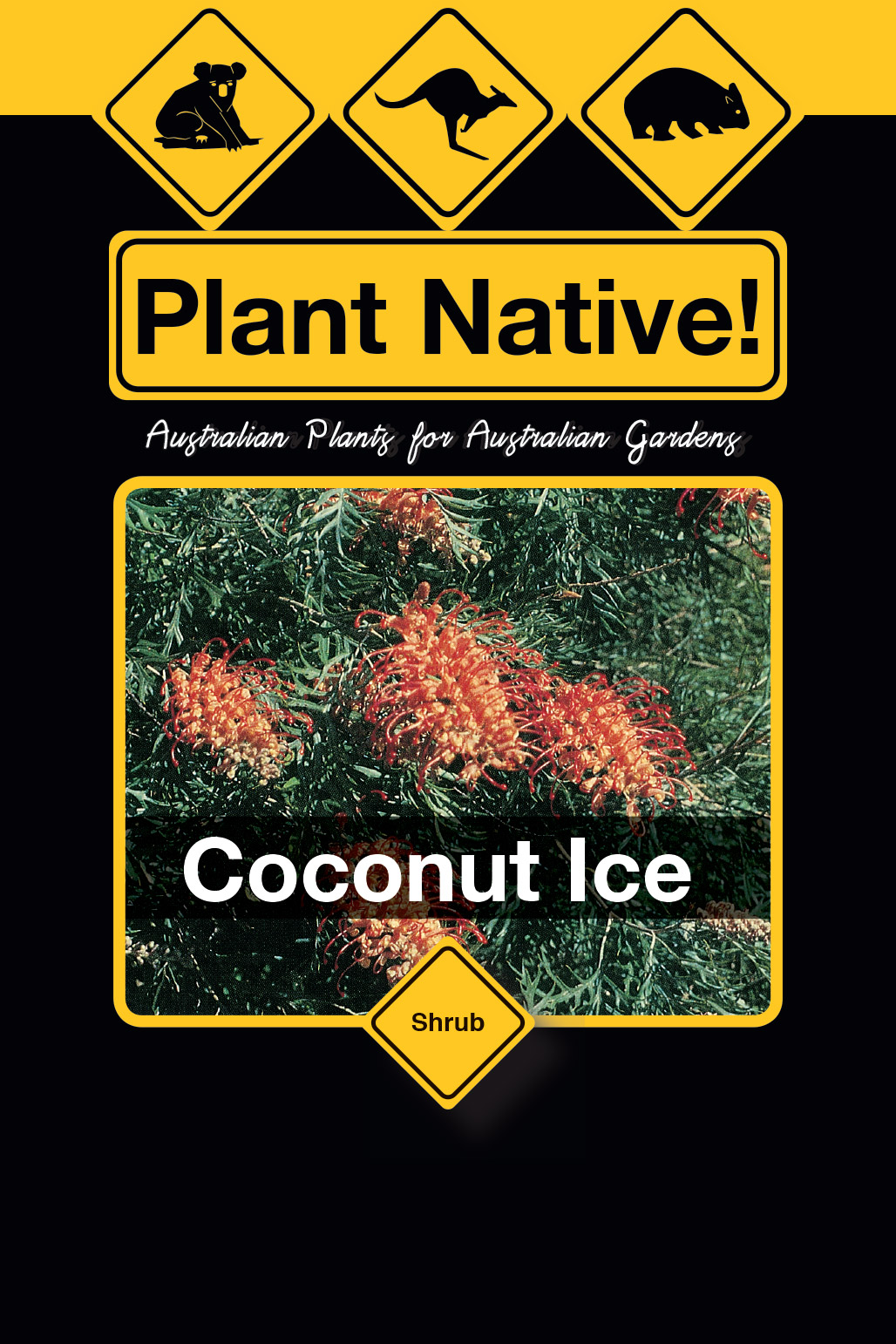 Coconut Ice - Plant Native!