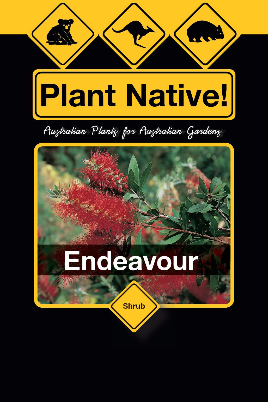 Endeavour - Plant Native!