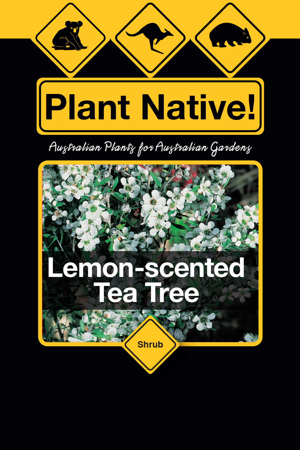 Lemon-scented Tea Tree - Plant Native!