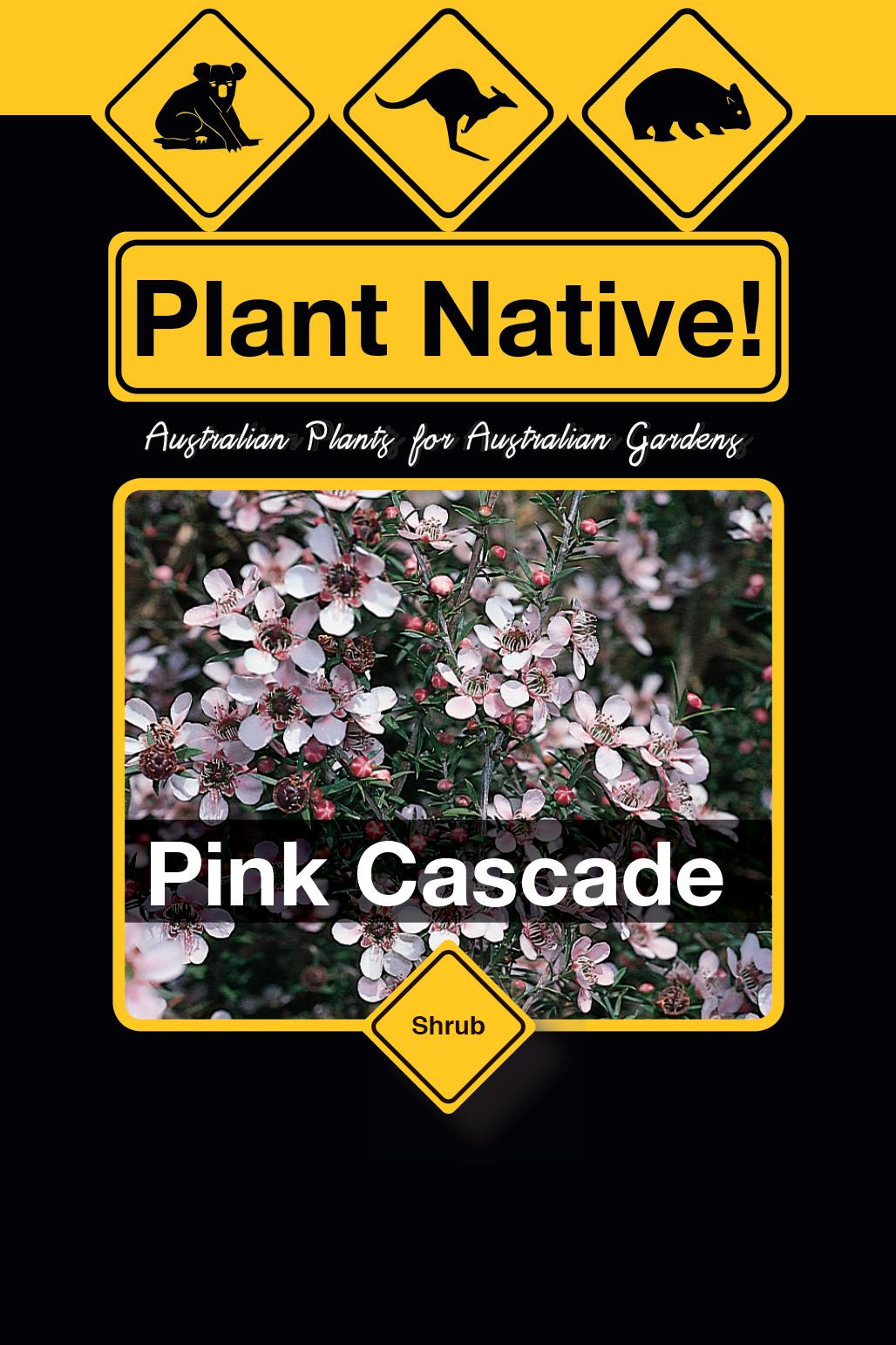 Pink Cascade - Plant Native!