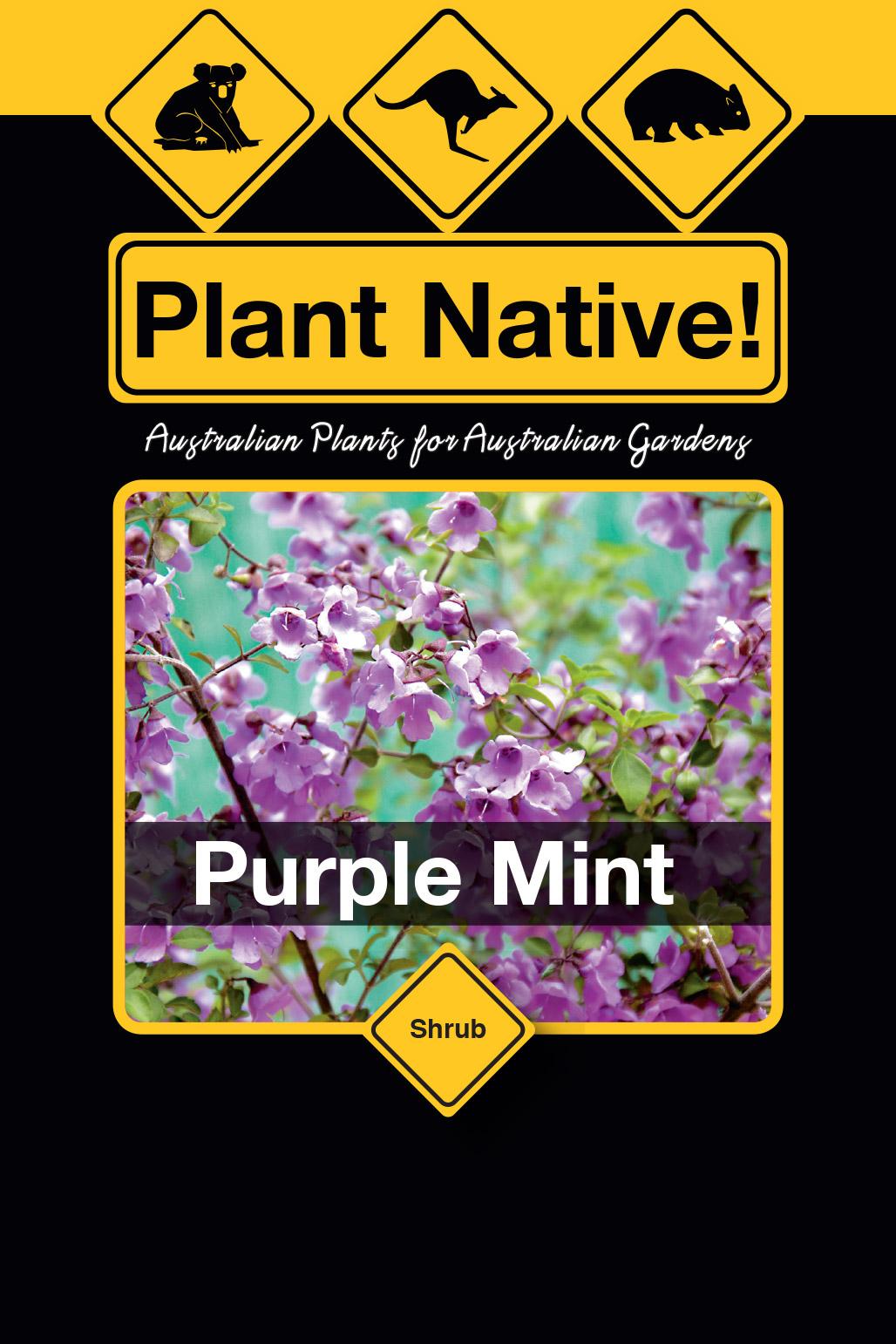 Purple Mint - Plant Native!