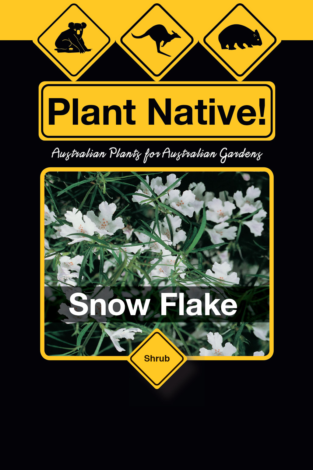 Snow Flake - Plant Native!