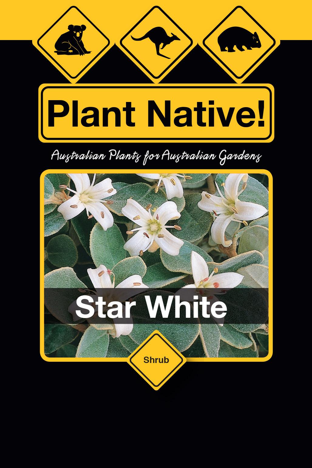 Star White - Plant Native!