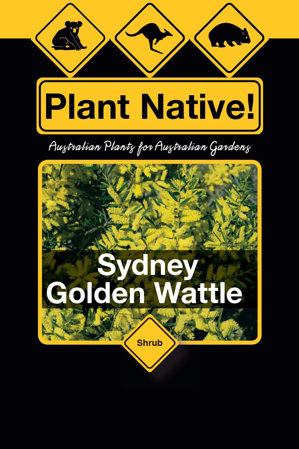 Sydney Golden Wattle - Plant Native!